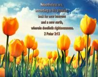 BIBLE VERSED (3)