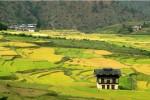 Bhutan Organic