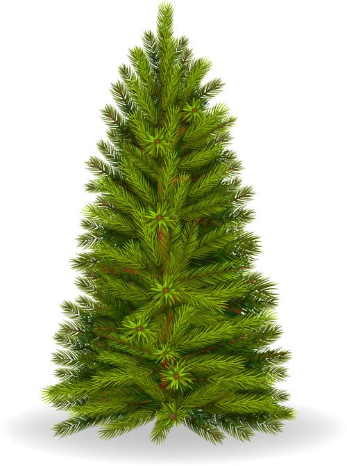 Christmas Green Fir Tree Vector Material 06 Vector
