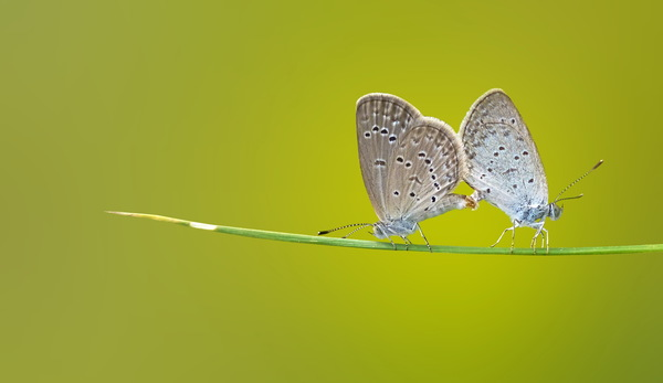 Photography Butterfly Hd Picture Free Download