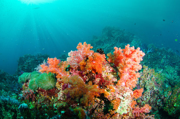 Plant Coral Reefs Life