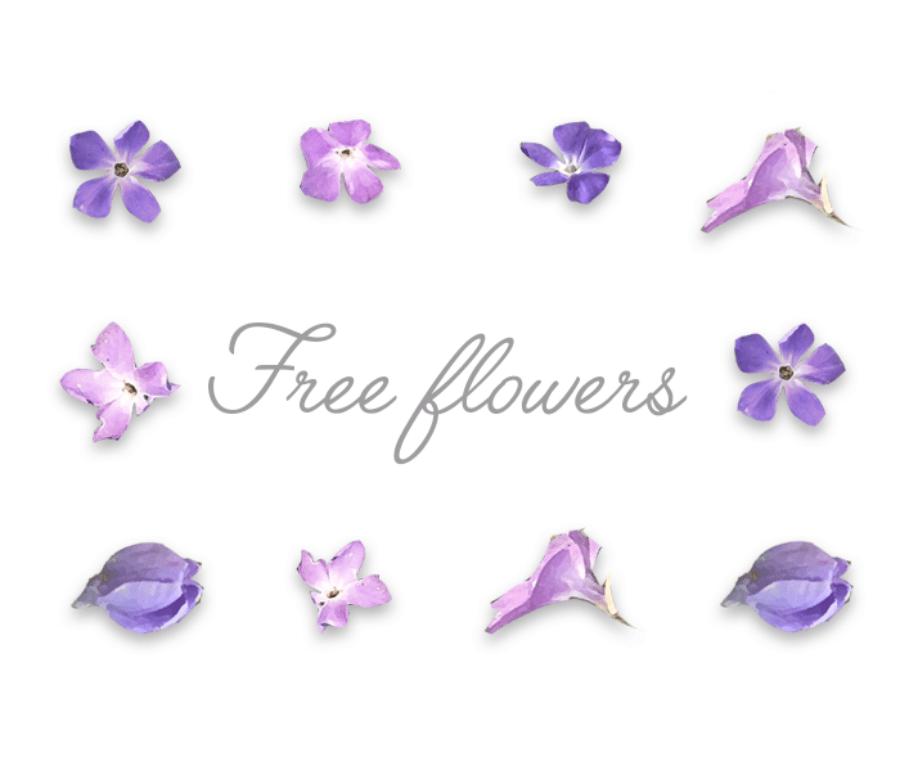 Free Violet Flower Elements