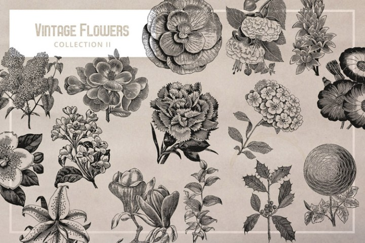 Free Vintage Flower Graphics