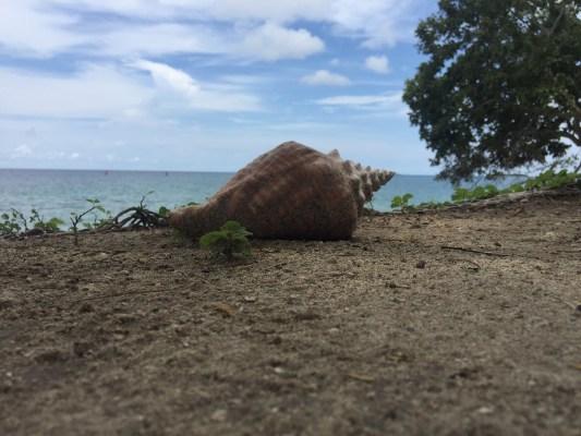 El Hamaquero – EcoHotel in Paradise