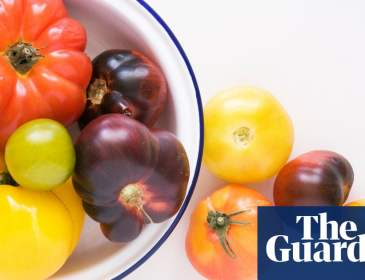 'The real jewels of the plant kingdom': growing heirloom tomatoes