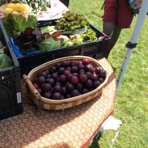 plums lettuce2014-06-15 13.10.25-2