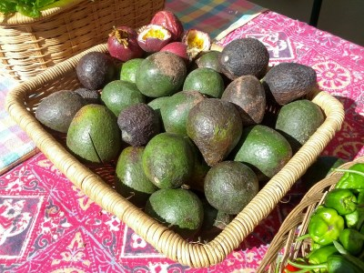 Avocados at Free Farm Stand