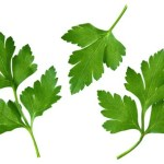 A selection of parsley leaves on a white background.