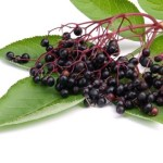A collection of elderberries resting on a green leaf.