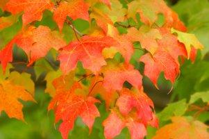 Autumn colours changing
