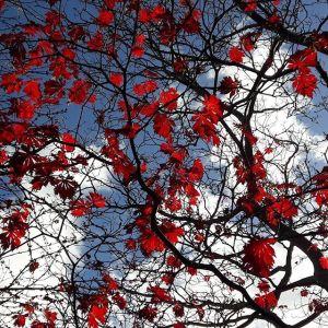 Autumn Mindfulness