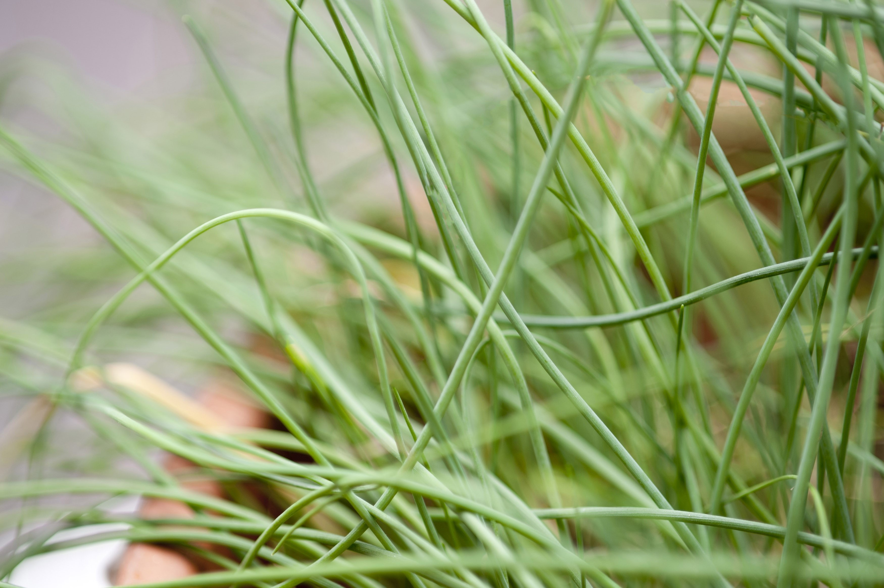 4 Delicious Herbs You Can Plant In Your Kitchen