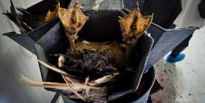 French Foie Gras Investigation: An Haute Cuisine Hell