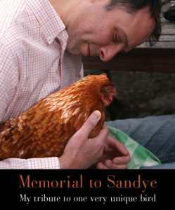 Celebrating Sandye: My Tribute to One Very Unique Hen