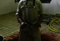 Shooting of Four Workers at Slaughterhouse and the Connection between Violence to Animals and Humans