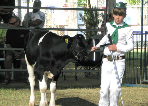 Bred Fed Veal Show