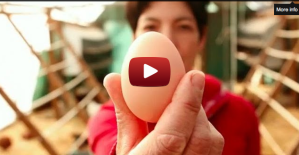 The Story of an Egg Documentary is Without a Yolk
