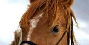 Why Horsemeat Is Delicious and Disgusting