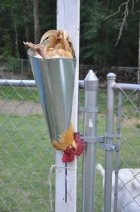pictured here is the kill cone method of slaughter which advocates of humane slaughter tout as the most humane way to kill chickens.