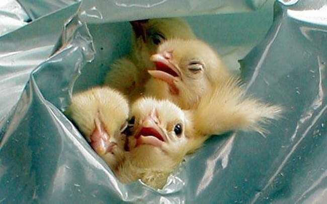 12 Egg Facts The Industry Doesnt Want You To Know