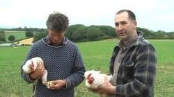 The Happy Chicken Farmer Fantasy