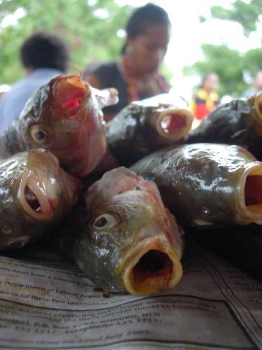 Dead fish at fish market