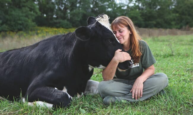 Cows are highly sensitive, affectionate and gentle, forming deep friendships and family bonds. Photo: Farm Sanctuary