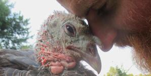 Turkeys Snuggling Like Cats and Dogs Will Touch Your Heart