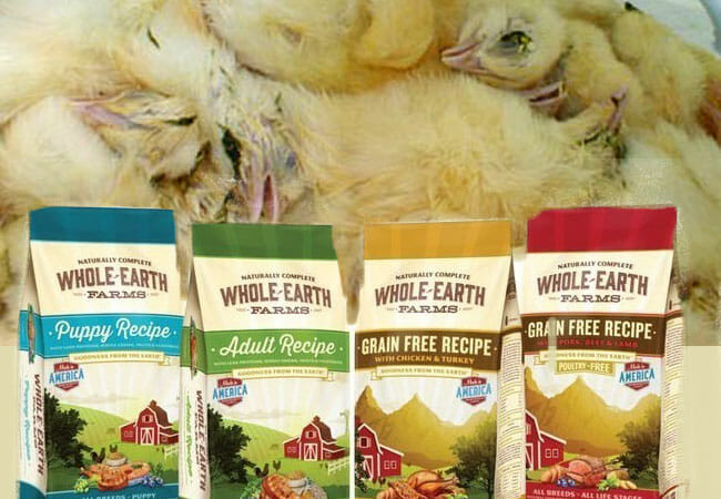 The Dark And Deceptive Side Of The Pet Food Industry Free From Harm