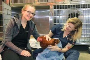 Dr. Abete and vet assistant Maria pet rescued rooster named Bodhi