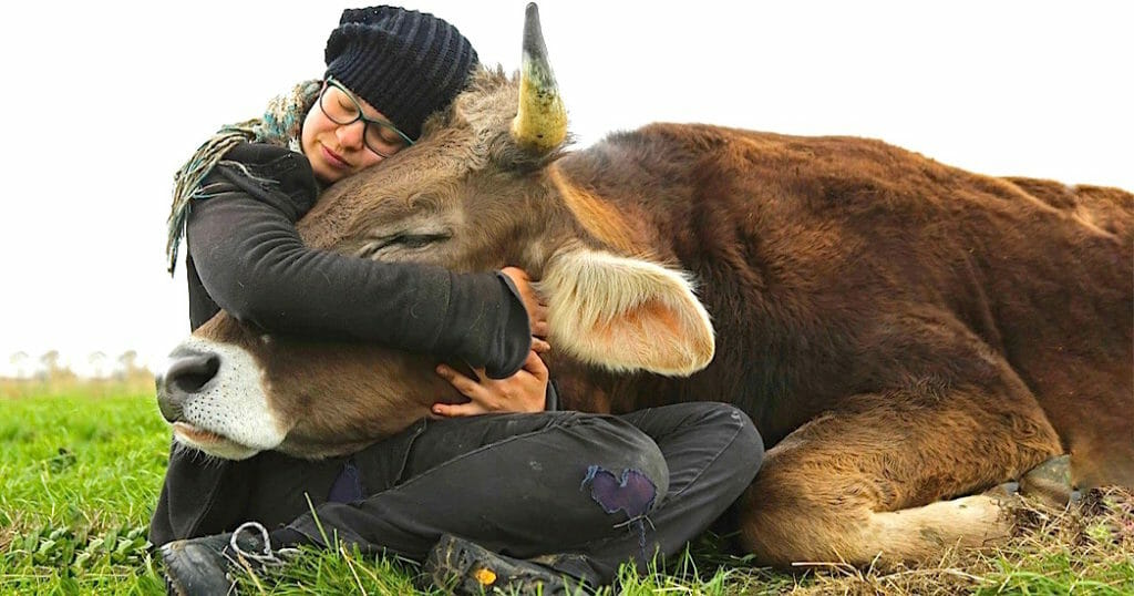 Image of: Animal Agriculture Free From Harm Why Vegan The Top Reasons