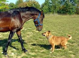 Horse Sniffing Dog