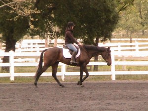 A forward, relaxed walk on London, a young OTTB.