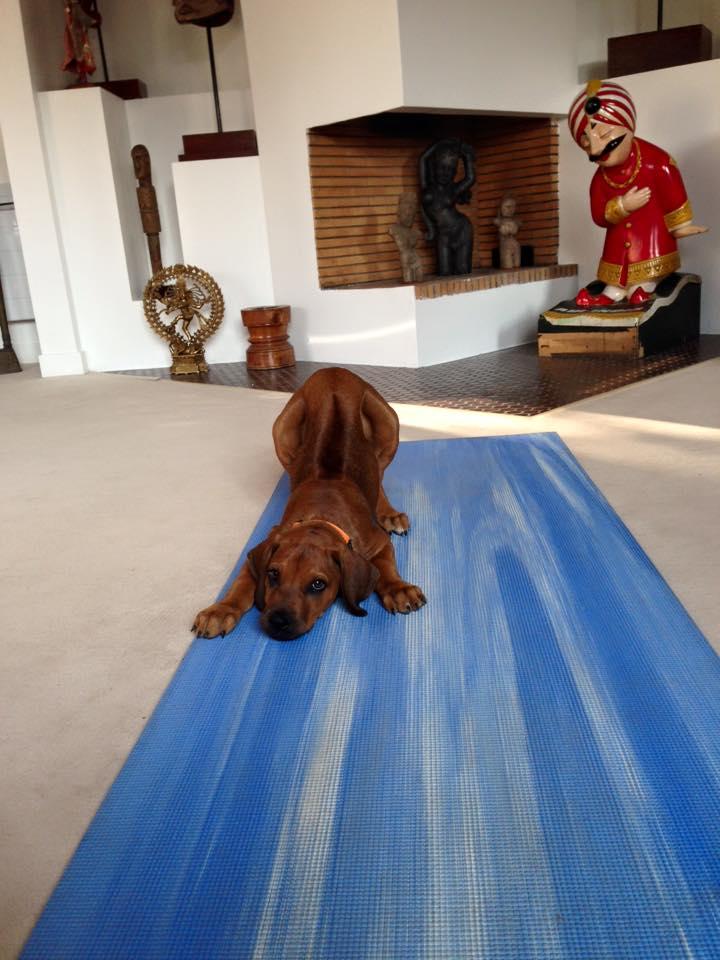 My Dog My Guru