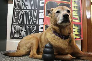 Keene's #1 Activist Dog
