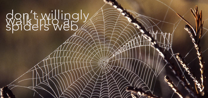 spiders-web