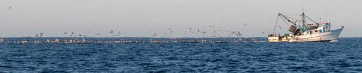 Shrimpers at work en route to Bahía Magdalena