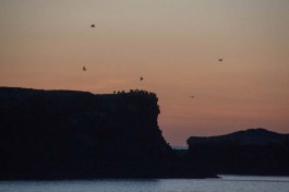 Isla Partida rookery