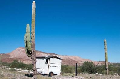Church storage and cacti
