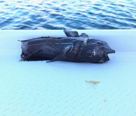 Osprey bomb in Puerto Don Juan