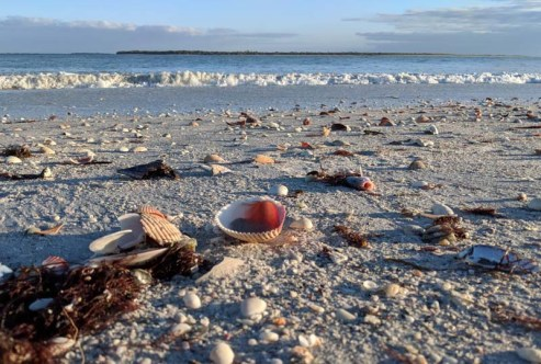 See the dead fish? The record-breaking red tide managed to kill off a gazillion sea critters, including over 500 sea turtles and hundreds of belugas