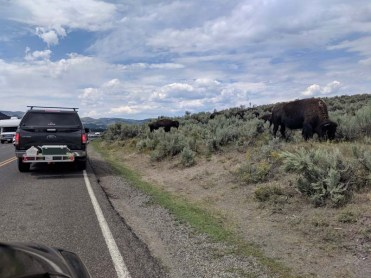 A typical scene in the Lamar Valley
