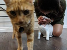 Catsitting often requires some kind of animal cruelty