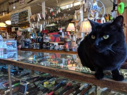 Hardware store kitty