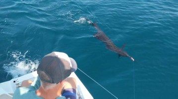 """""""Sorry, Mr. Sailfish, but I really need my special lure, Pinky, back!"""""""