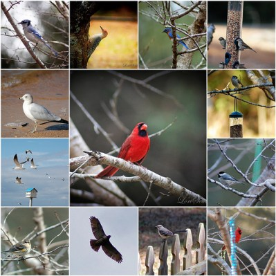 Help Researchers by Counting Birds this Weekend!