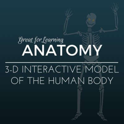 Learn Anatomy with this 3-D Interactive Model of the Human Body