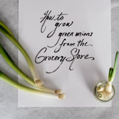 An Extremely Simple Biology Lesson : Growing Green Onions from the Grocery Store