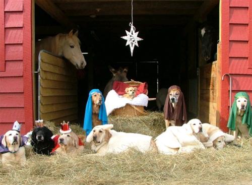 pop culture nativity, Crèche, nativity scene