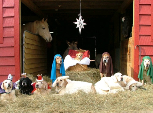 pop culture nativity, Crèche, nativity scene